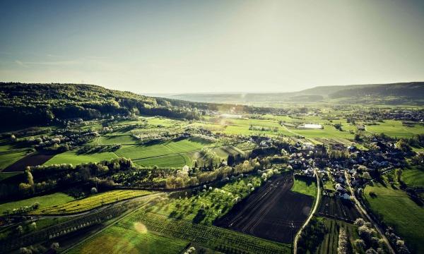 EZine Forestry Report