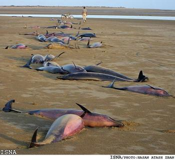 Dead_Dolphins_Jask_PersianGulf1_xlarge