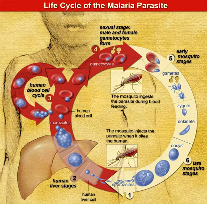 Malaria_CDC_PHIL