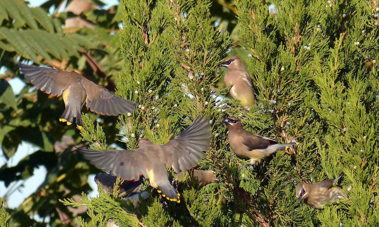 BIRDS-LYME