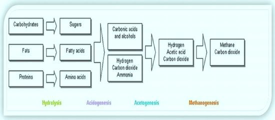 Anaerobic-digestion_process chemistry