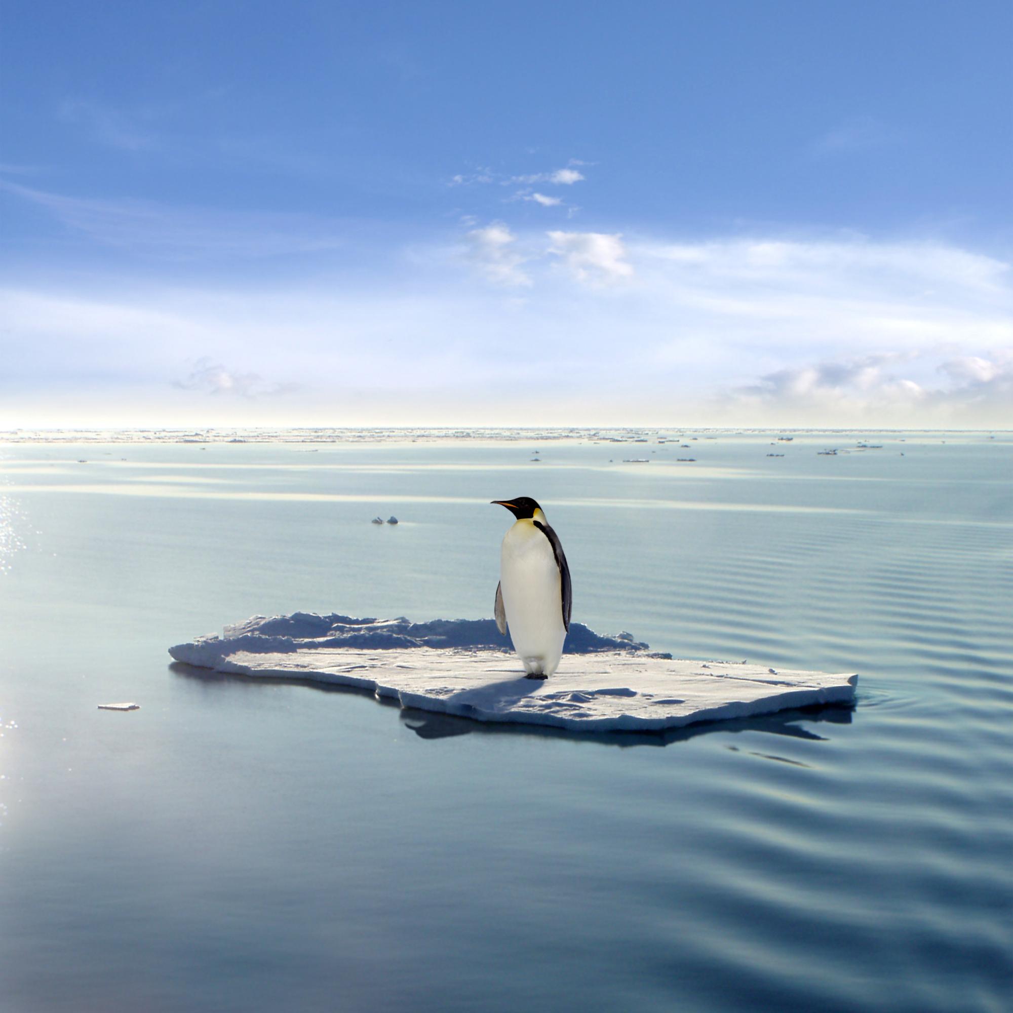 Penguin on ice block_shutterstock_3784216