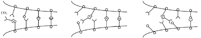 CO2 molecules attaching H-bonds