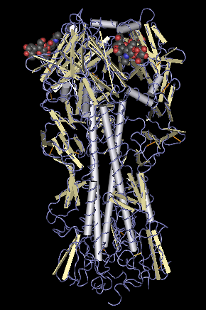 Hemagglutinin_molecule