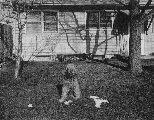 Photograph by Nicholas Nixon, Fred, 1975
