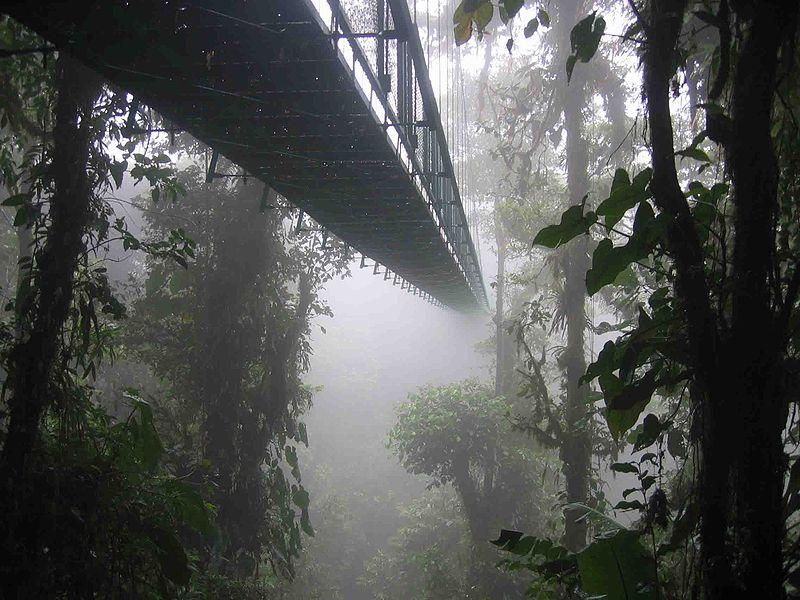 800px-Costa_rica_santa_elena_skywalk
