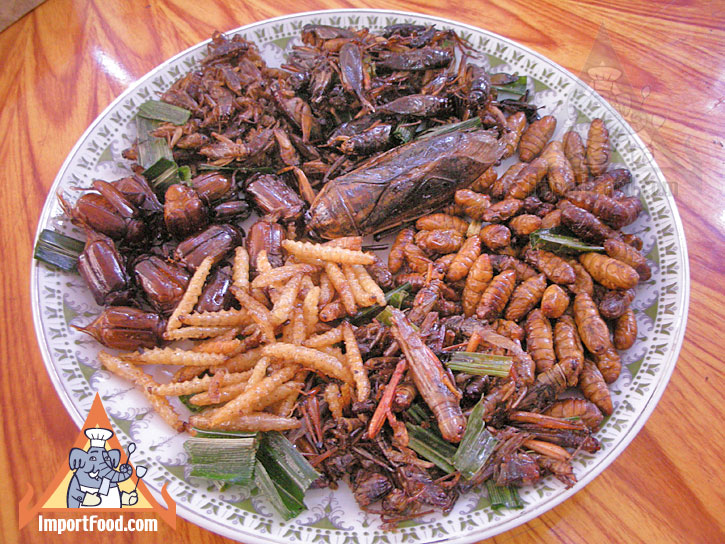 Insect_food_plate