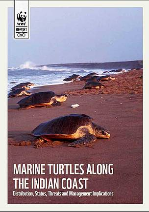 Turtle_report_37640