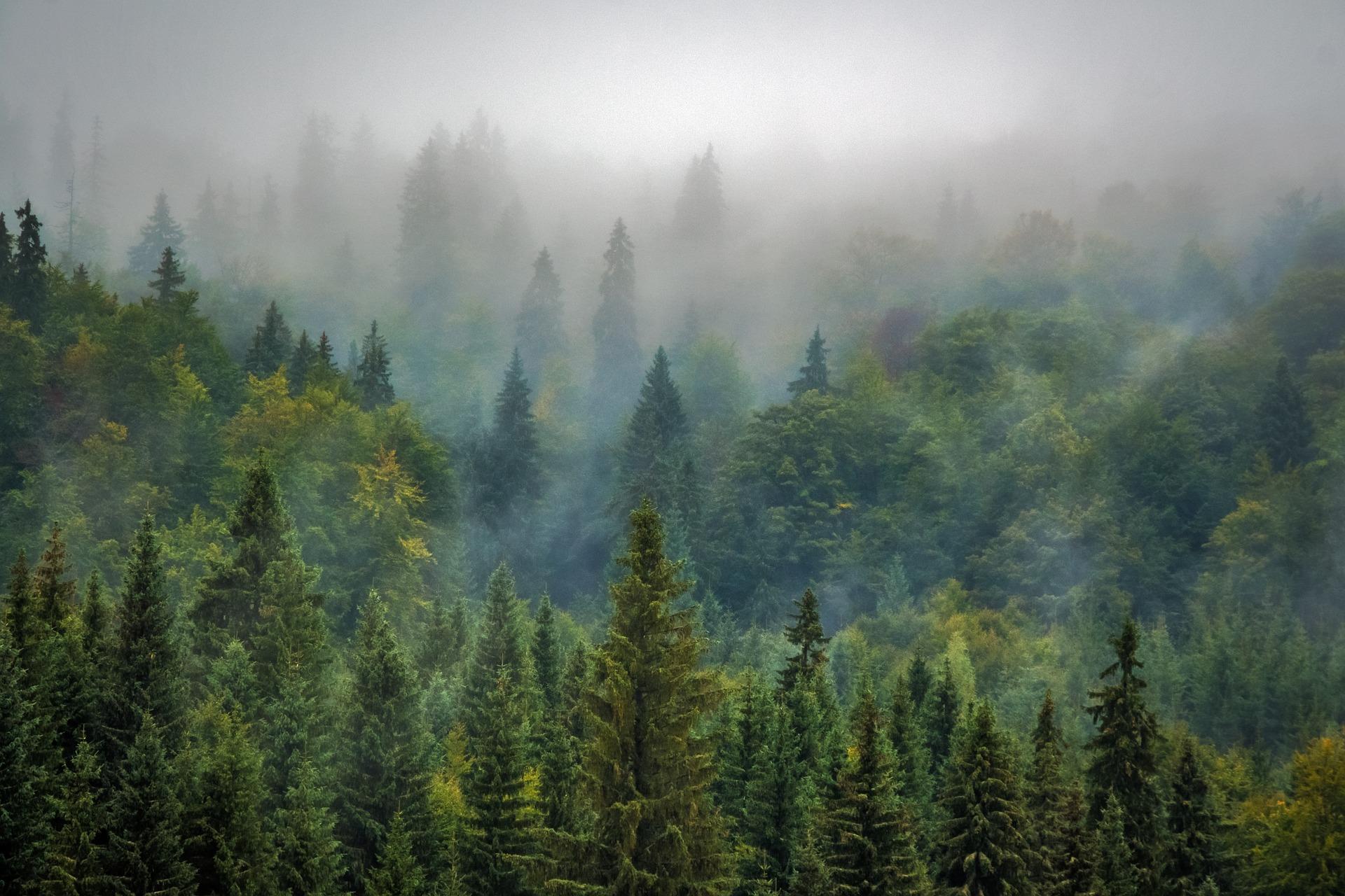 Forested_landscape