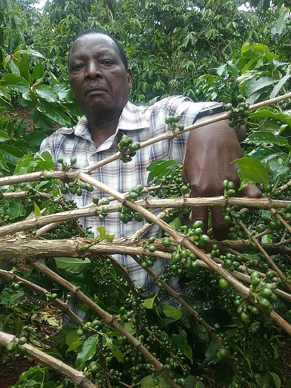 576px-Coffee_farmer_in_Kenya