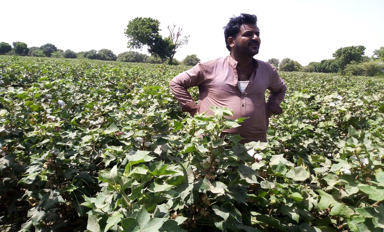 CABI on Cotton part 2 Dahri