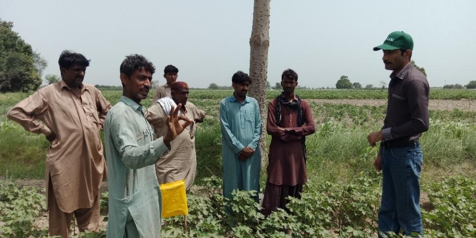 CABI on Cotton part 2 Shahbaz 1