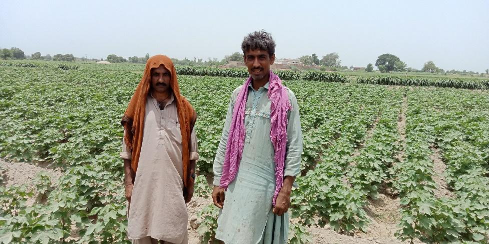 CABI on Cotton part 2 Shahbaz 2