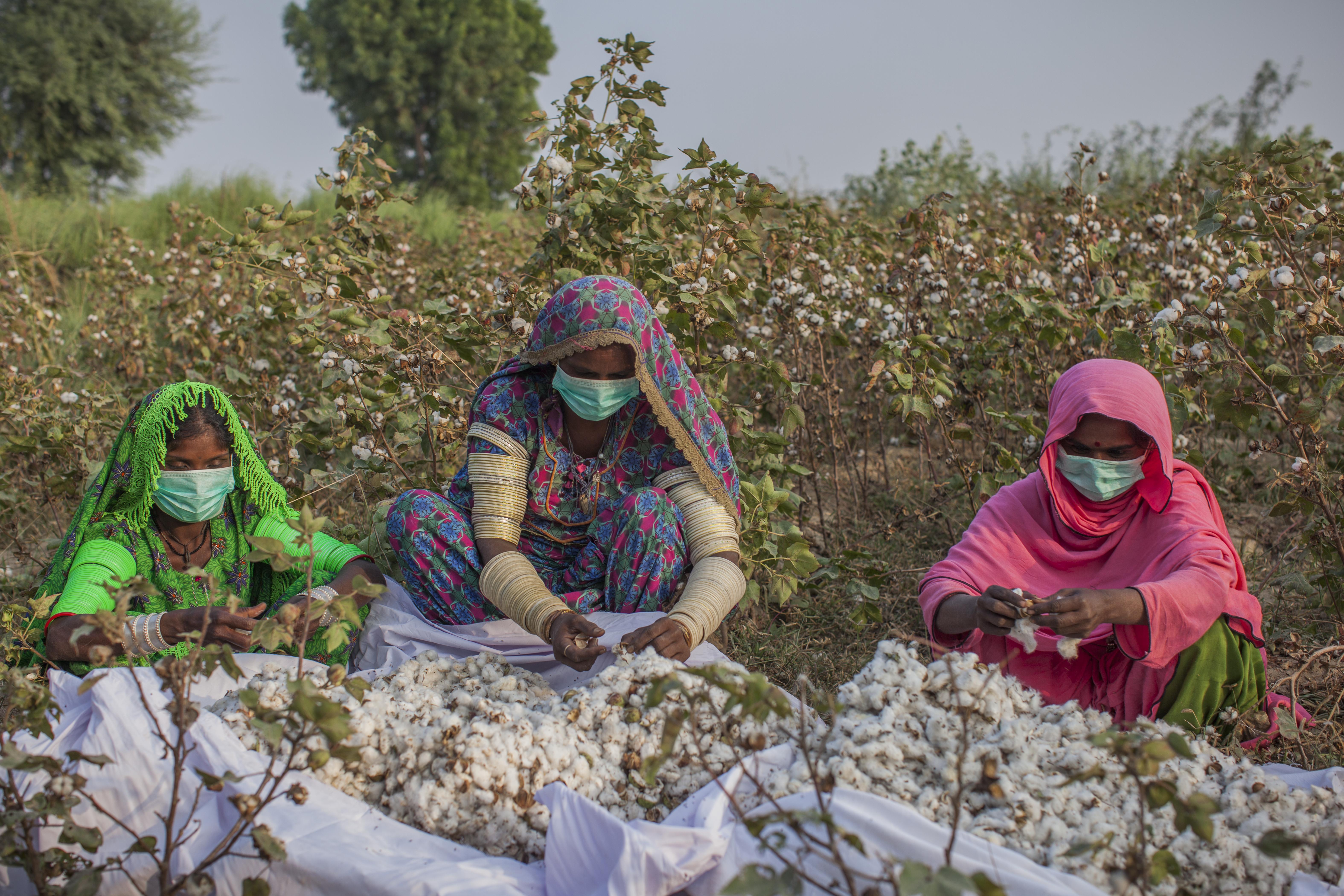 Better Cotton Project Sind, Pakistan