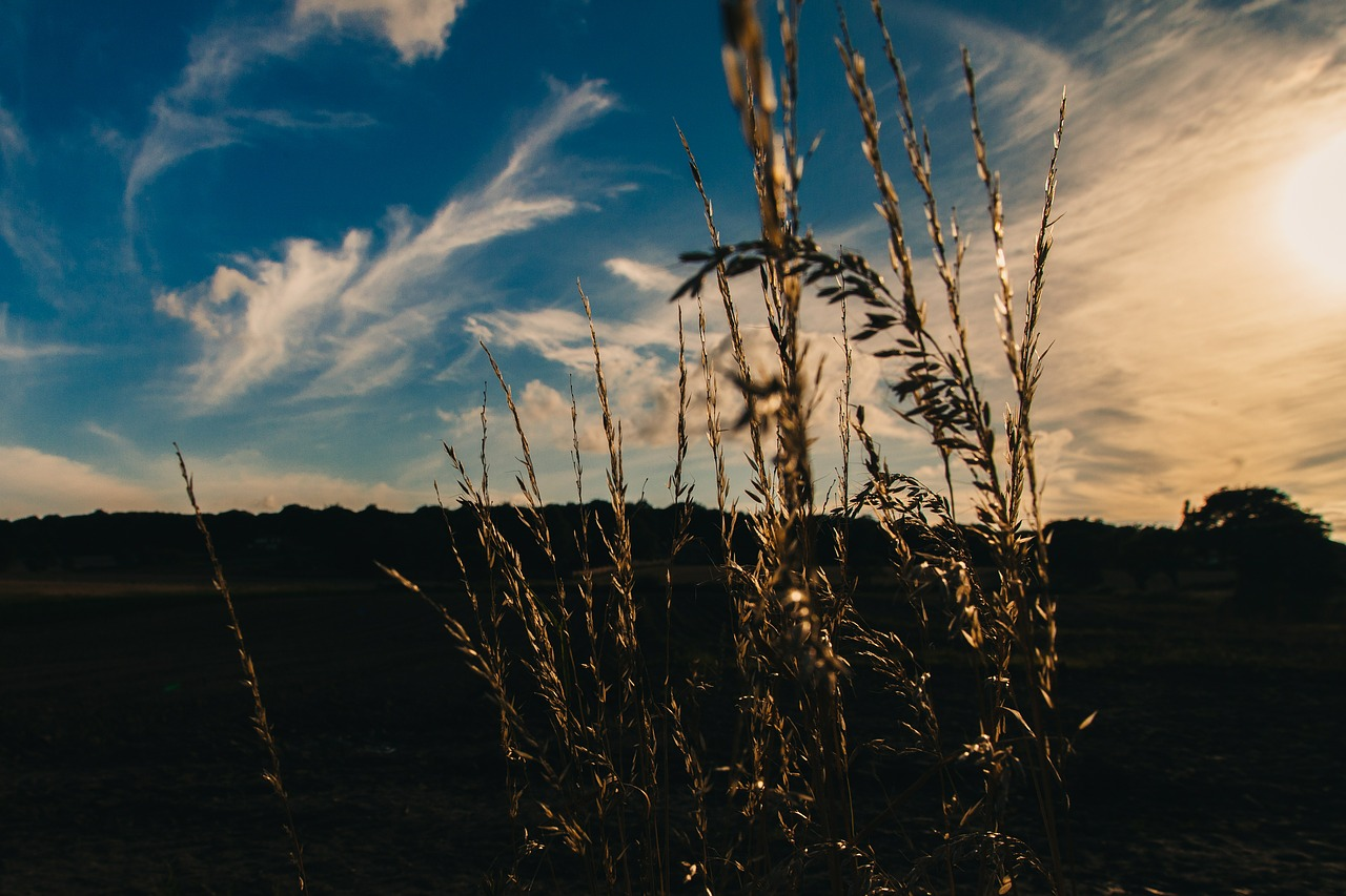 pasture_grassland