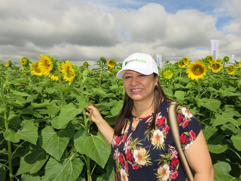 Yelitza in sunflower field