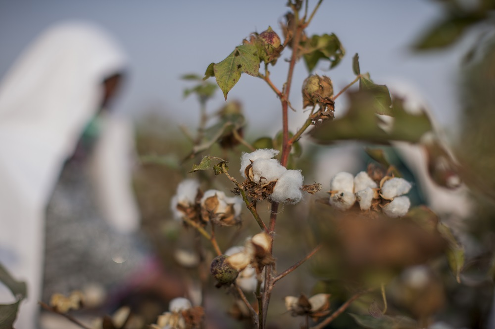 Better Cotton Project Sindh, Pakistan
