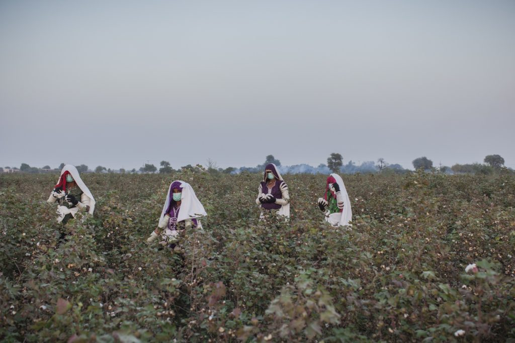 Women pick cotton on a farm during a harvest at the Farm Naimatullah Laghari, Sinjhoro, Sanghar, Sindh, Pakistan.
