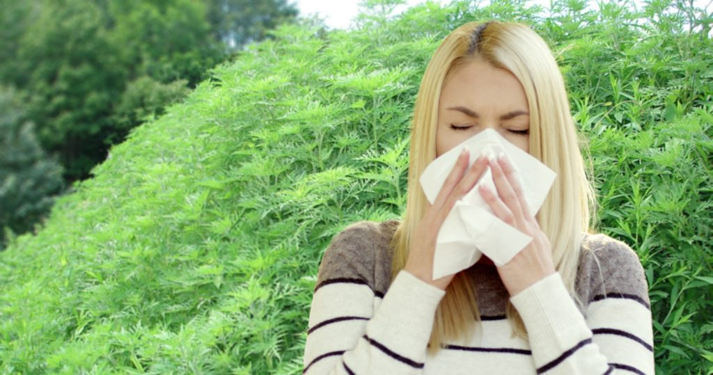 Woman sneezing due to ragweed