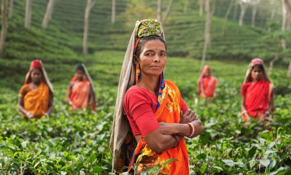 International Tea Day 2020: celebrating tea's importance to our planet