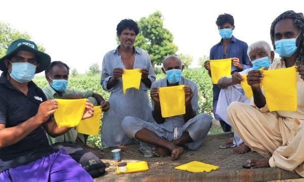 Initiating-yellow-sticky-traps-BCI