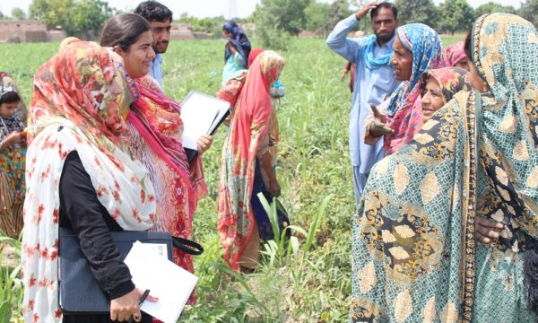 Project team members visiting farming community in Muzaffargarh to know the knowledge and skills of vegetable farmers.