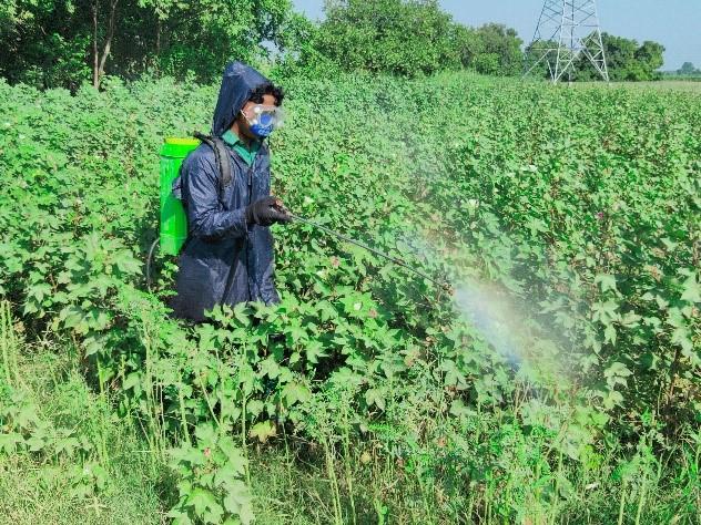 During-usage-of-botanical-spray