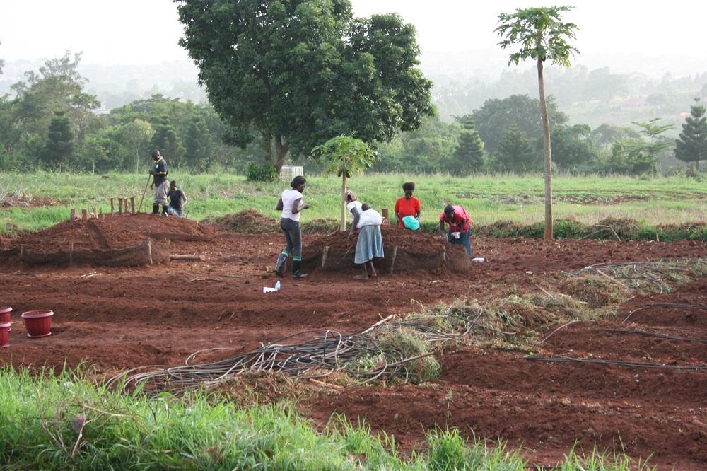 Plantwise Clinics Uganda
